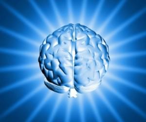 elastic brain